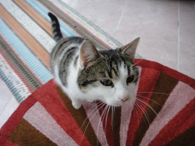 2011_0219_猫