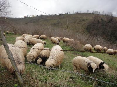 2011_0301_羊2