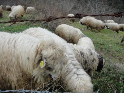 2011_0301_羊1