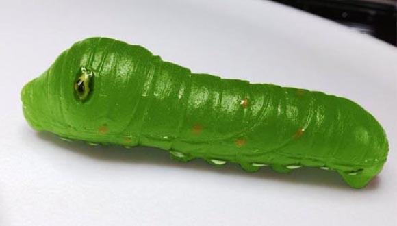 Larvae-Candy-7.jpg