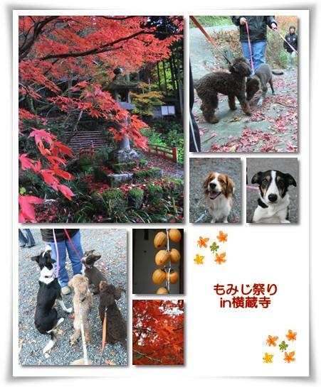 2010-11-23-3.jpg