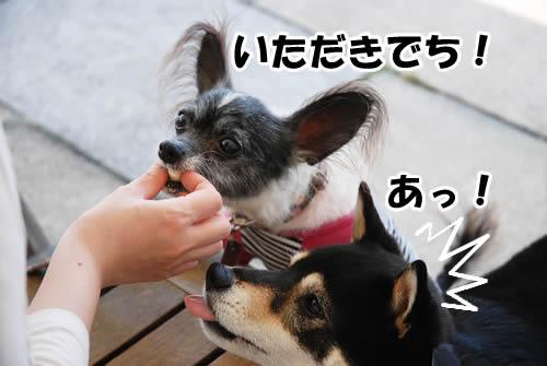 20110529_0881.jpg