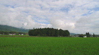 小岩嶽農場の田んぼ