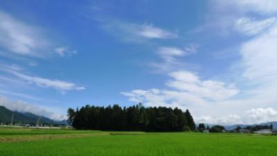 新屋の神社と夏の空