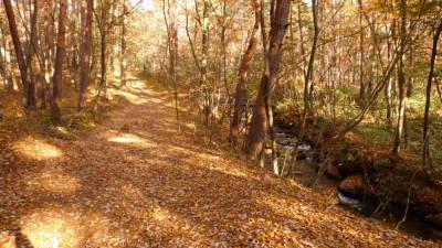 天満沢川沿いの落ち葉
