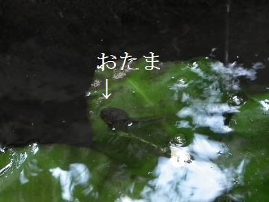 11nove01023.jpg