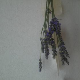 DCIM3447_20120716181906.jpg