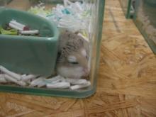 スローライフ日記-お店で寝起き