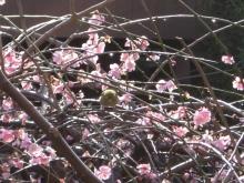 スローライフ日記 (癌との闘病日記はもうすぐ終わりにします)-小鳥が遊びにきました