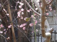 スローライフ日記 (癌との闘病日記はもうすぐ終わりにします)-小鳥遊んでます