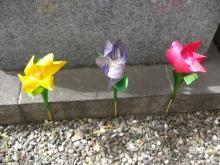 スローライフ日記-TOMY叔父さんの作ったお花