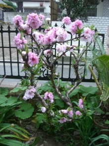 東京でプチスローライフ-ももの木