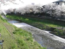 東京でプチスローライフ-夜桜の準備中