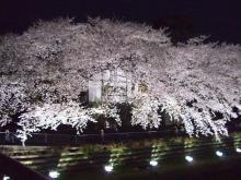 東京でプチスローライフ-夜桜