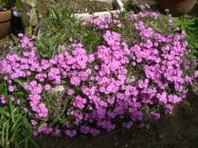 東京でプチスローライフ-母の植えた花