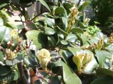 東京でプチスローライフ-名前の分からないお花