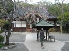 東京でプチスローライフ-お寺を散歩