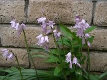 東京でプチスローライフ-紫色の花