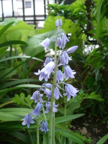 東京でプチスローライフ-同じ種類の花?