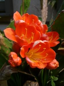 東京でプチスローライフ-何の花だったかな?