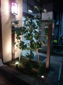 ログハウスでワインを楽しむスローライフ日記-店の前のブドウの木
