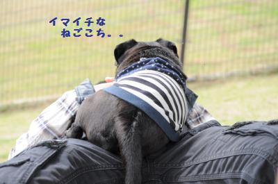 011_convert_20120512011835.jpg