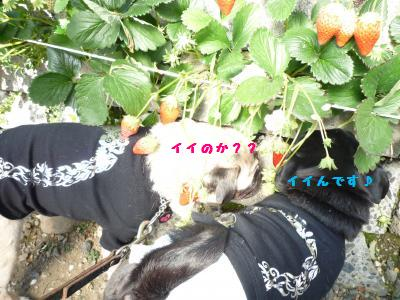 027_convert_20120220101842.jpg