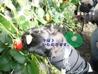 033_convert_20120220102044.jpg