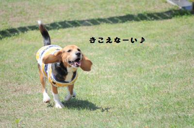 045_convert_20120512012607.jpg