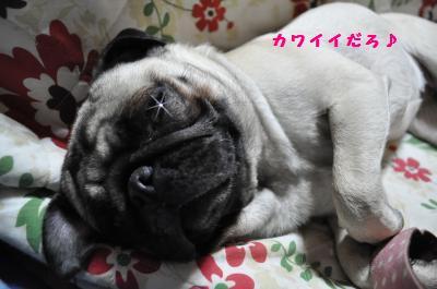 057_convert_20120512011331.jpg
