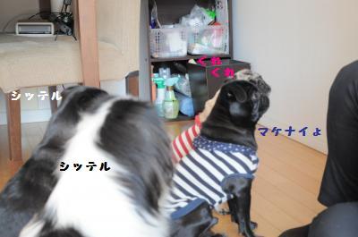 060_convert_20120329164246.jpg