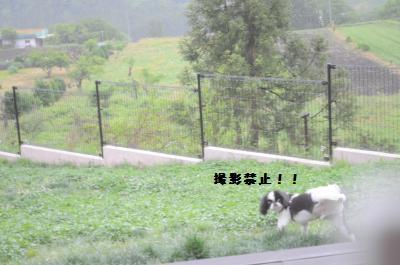 124_convert_20120529001359.jpg