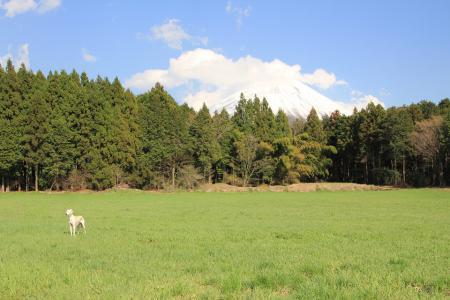 20110424_asagiri_IMG_0299.jpg