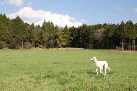 20110424_asagiri_IMG_0315.jpg