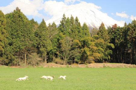 20110424_asagiri_IMG_0339.jpg