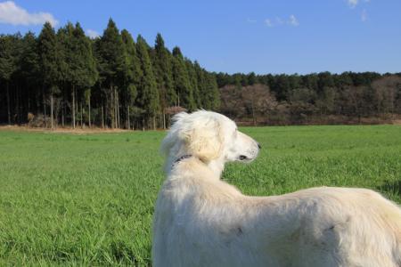 20110424_asagiri_IMG_0348.jpg