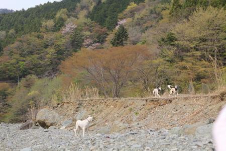 20110426_tanzawa_IMG_0126.jpg