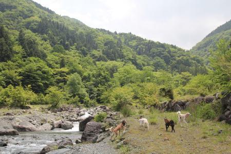 tanzawa20110606_IMG_0027.jpg