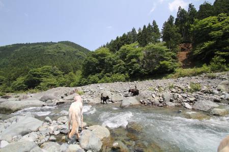 tanzawa20110606_IMG_0061.jpg