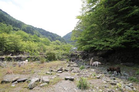 tanzawa20110606_IMG_0110.jpg