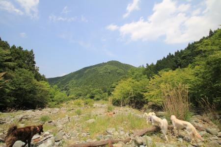 tanzawa20110606_IMG_0127.jpg