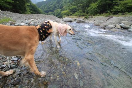 tanzawa20110606_IMG_0158.jpg