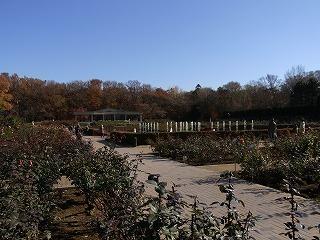 201112神代植物園 006