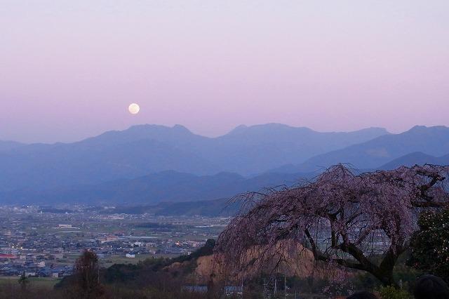 しだれ桜と満月1