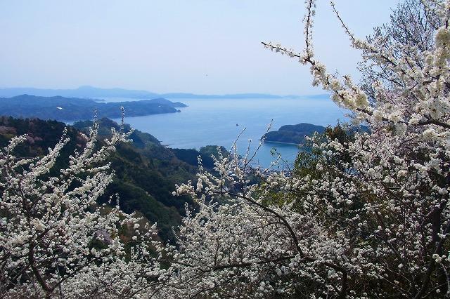 3野福峠の桜
