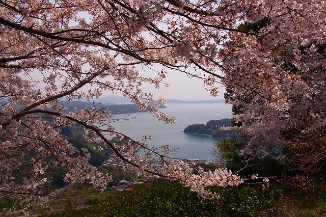 4野福峠の桜