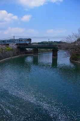 8花筏と電車