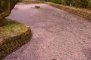 瑞応寺の池