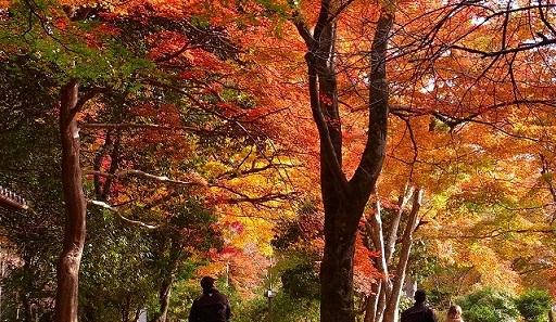 15・2011京都 天龍寺