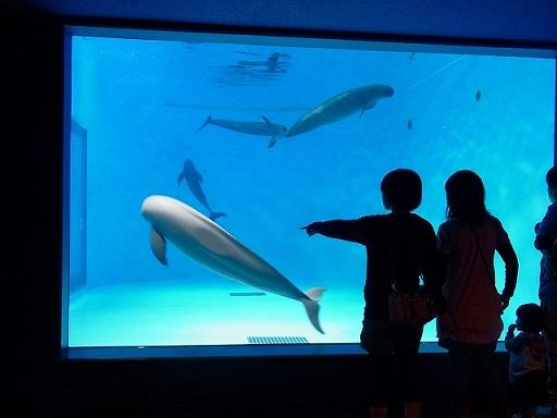 23宮島水族館